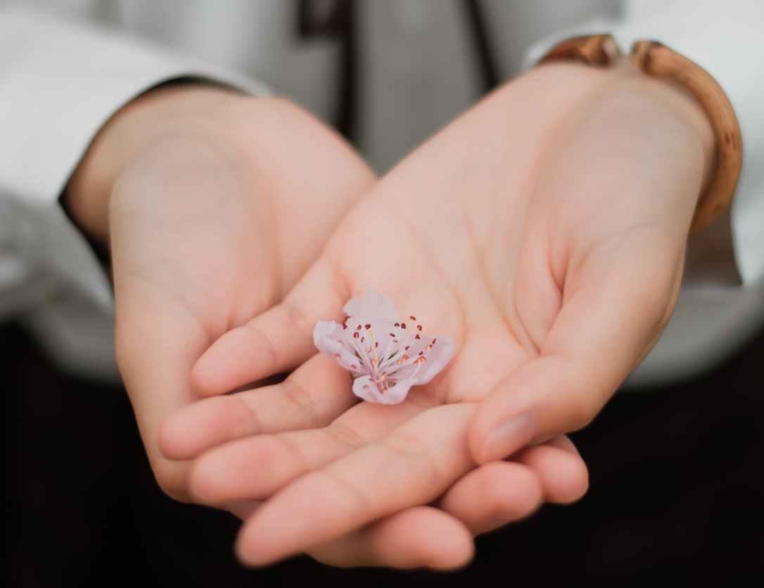 blur close up flower hands